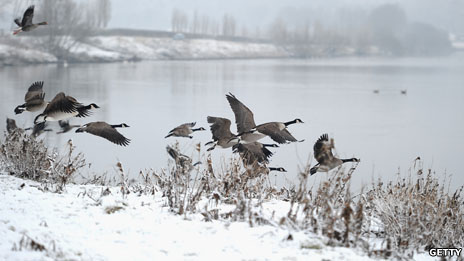 Birds on the River Trent
