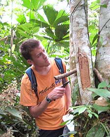 Resultado de imagen para fotos del hongo en el Amazonas que come plástico