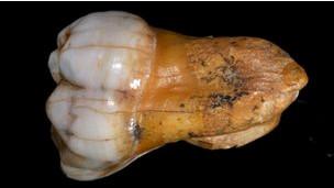 Секс у неандерталцев