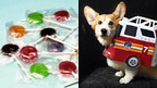 Lollipops and a corgi dog