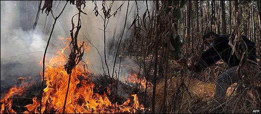 Resultado de imagen para incendios forestales en bolivia