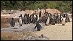 A praia artificial dos pinguins no Zoológico de Londres