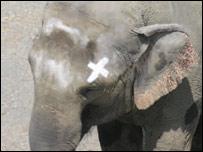 Elefante Happy
