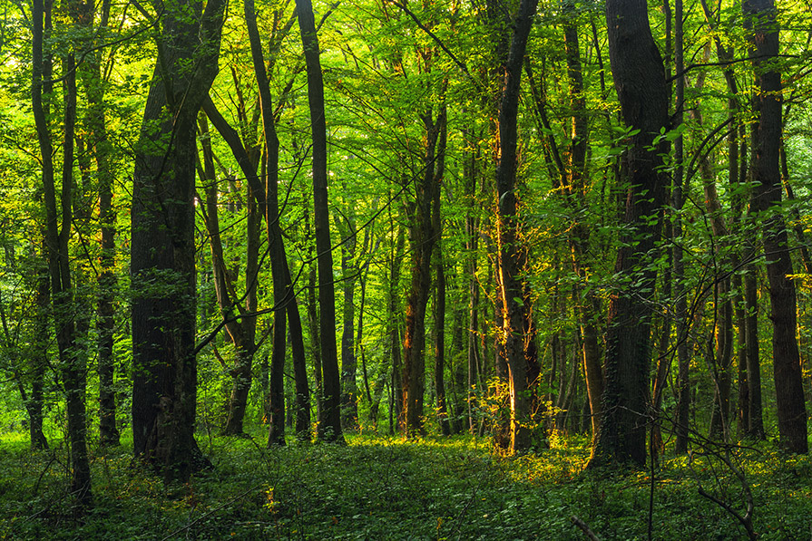 How farming in forests could sustain the planet