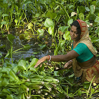 The remarkable floating gardens of Bangladesh