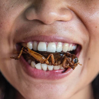 The business of eating bugs