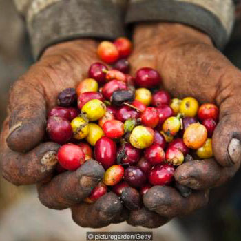 The man who saved Colombian coffee