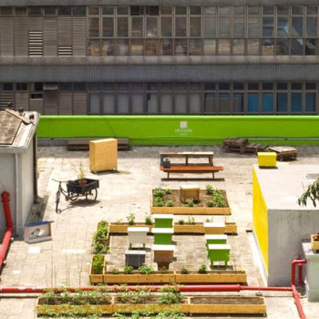 Rooftop farming in Hong Kong