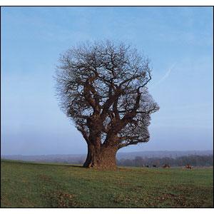 Tree of Half Life, do Pink Floyd