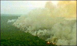 Cerca de 14% da Amazônia já teria sido destruída