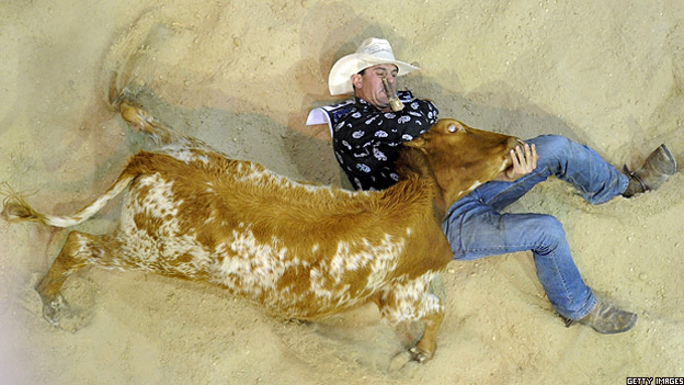 Cowboy Terry Evison brings a bull down in a rodeo