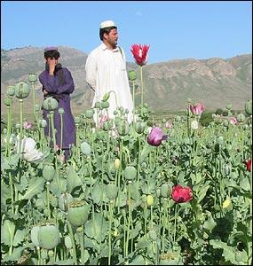 خوش نما پھول